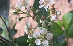雷竞技raybet开花
